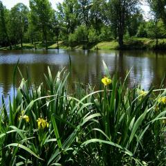 Journée à l'étang de la Nacelle