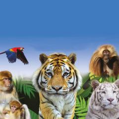 Journée au Parc des Félins et Terre de Singes