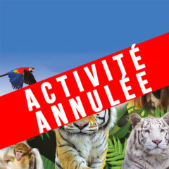 Activité annulée // Journée au Parc des Félins et Terre de Singes